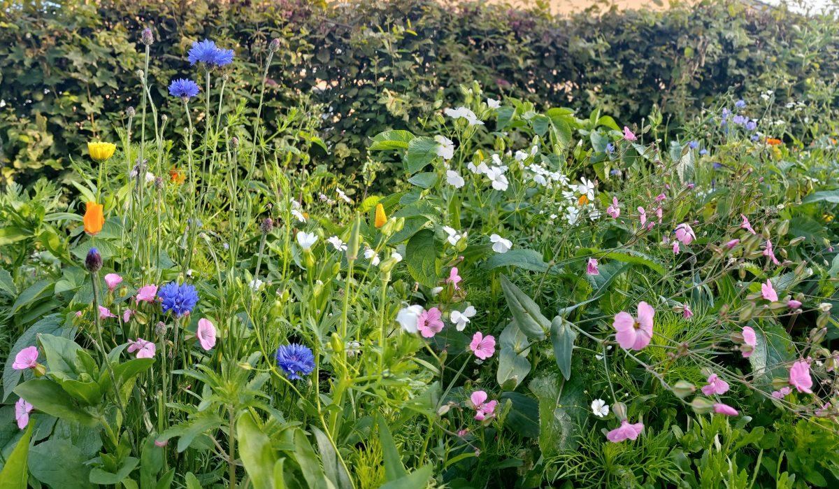 Blütenzauber für Bürener Gärten